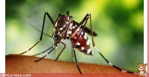 Como se transmite el dengue