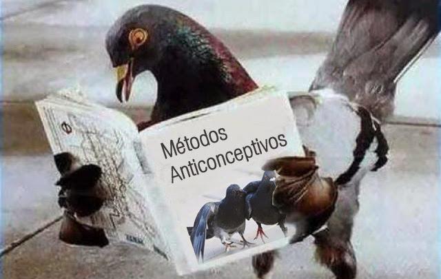 Alimento anticonceptivo para palomas