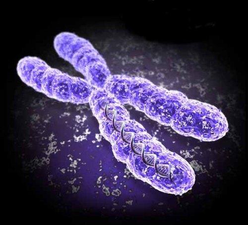 Cuántos cromosomas tiene el ser humano