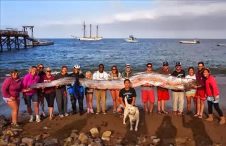 Encuentran serpiente marina de casi seis metros