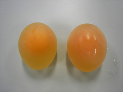 El huevo que rebota (experimento)