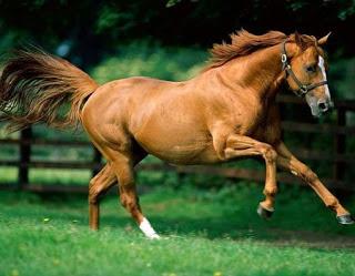 Imágenes de caballos hermosos