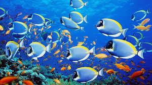 ¿Los peces tienen buena memoria?