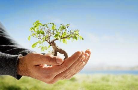 ¿Por qué es importante cuidar el medio ambiente?