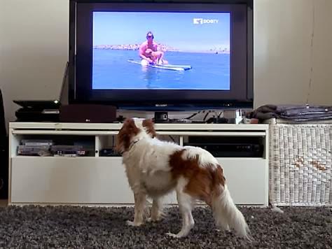 Noticia curiosa: Perros tienen su propio canal de televisión